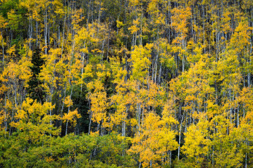 Trees in autumn colors in Alaska