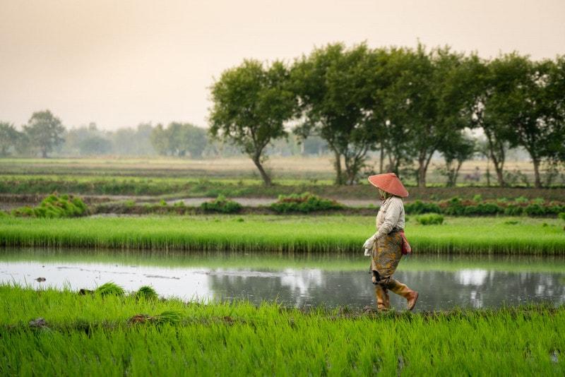 Rice field, Kengtung, Myanmar