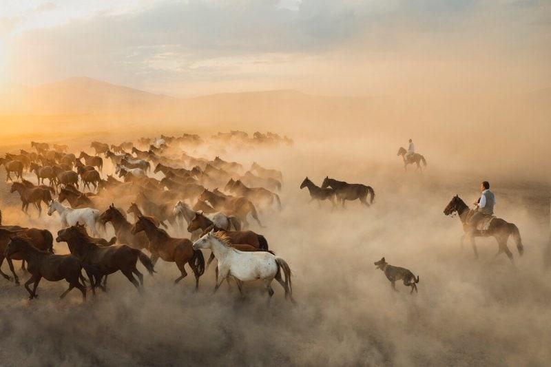Cowboys and wild horses in Cappadocia