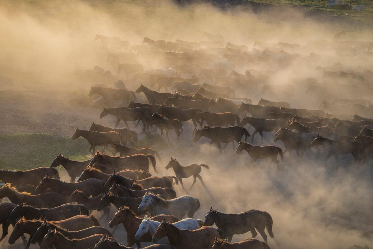 Wild horses in Cappadocia